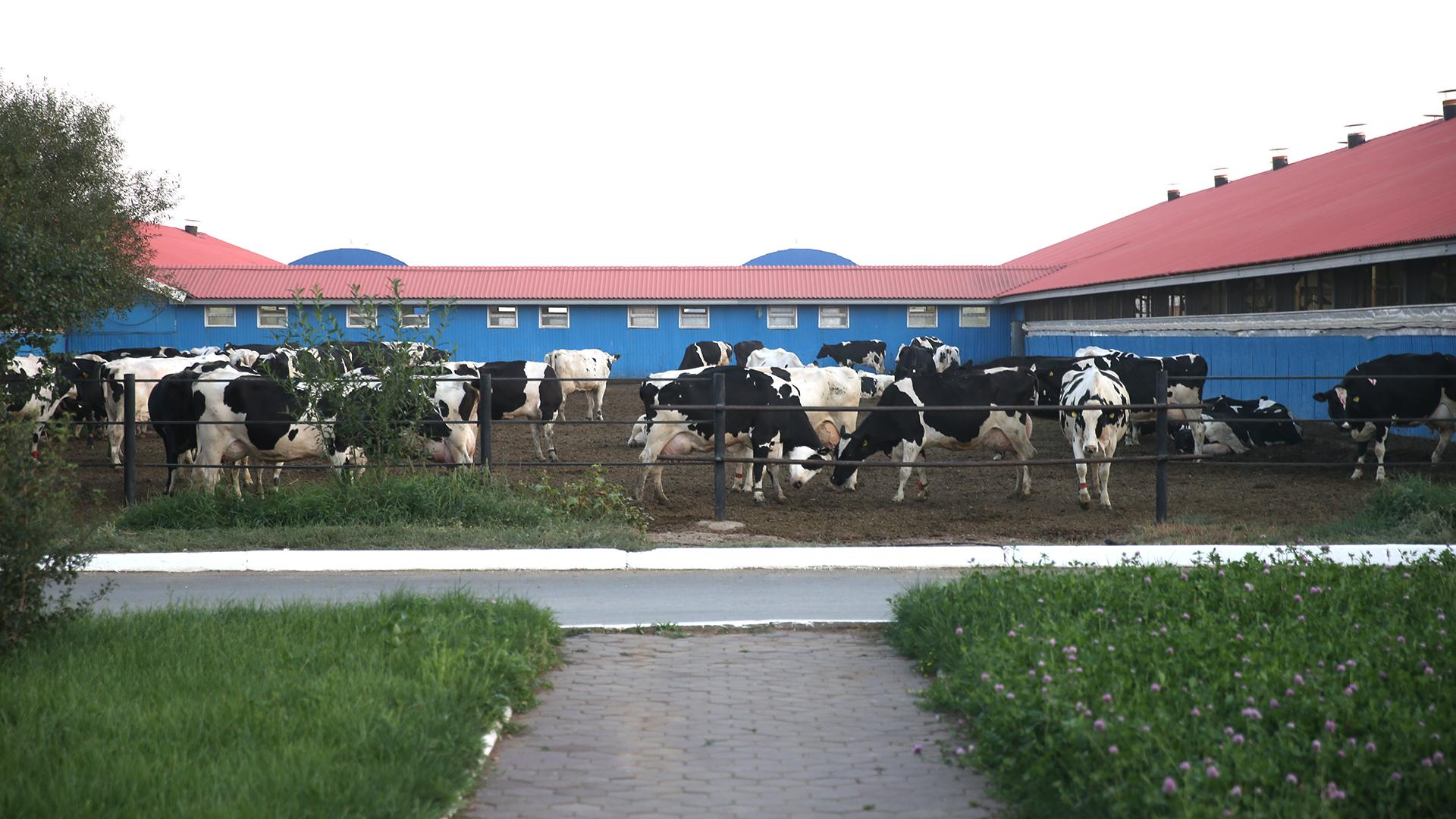 Аскар Мамин требует устранить дискриминацию казахстанских рабочих 4